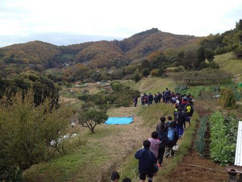 弘法山を望むみかん山にて