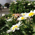 春の気配と花を愛でる心