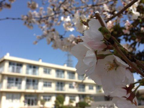 桜も咲いてお別れの季節がやって来た