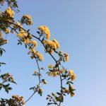 早朝散歩で出会う花たちはiPhoneで