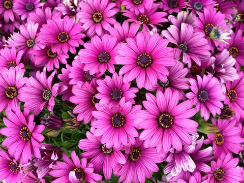 みんなで花を咲かせよう!