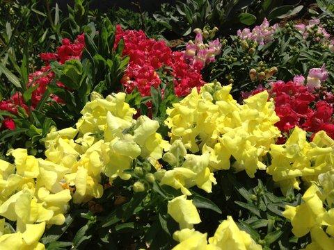 花を見るだけでも幸せな気分になる
