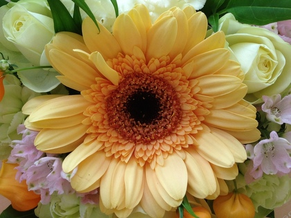 NOBUさんの花はいつもキレイ