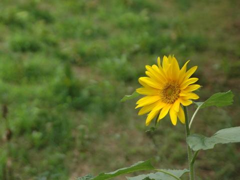 自分の花を咲かせれば良い!
