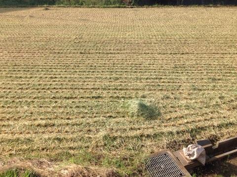 今年は早めの稲刈りシーズン