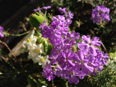 台風18号に負けずに咲く花たち