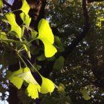 秋から冬へと向かう自然の中で育む「子どもたちの感じる力」