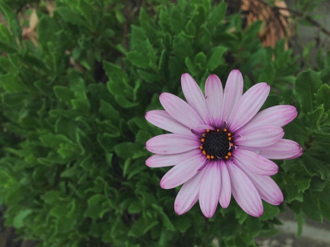 変わる季節の中で咲く花と半袖シャツ