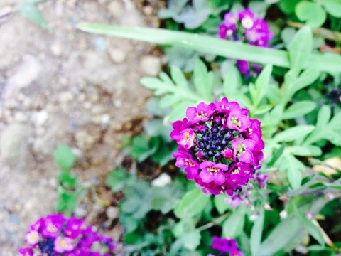 小さな花に学ぶ行動学