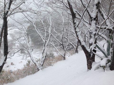 弘法山麓も雪化粧