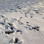 大雪で心配な清里方面