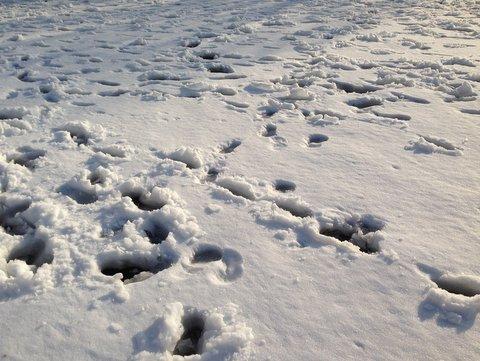 雪が残るグランド