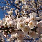 桜咲く年度末、時代は変わることを実感する