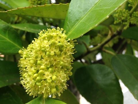 街路樹に咲く花