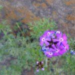 道端に咲く花を観察することから学べること