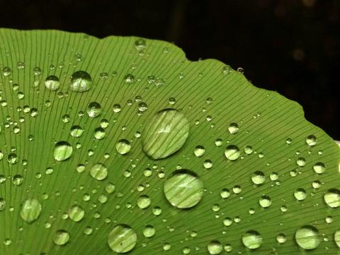 梅雨は梅雨で楽しめばいい