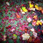 秋深まる雨の朝を楽しむ