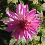 大寒に咲く花に生きる意味を考える