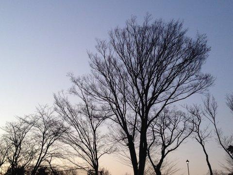歩きながら空を見上げると…
