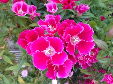 通勤中に楽しめる街の植物園