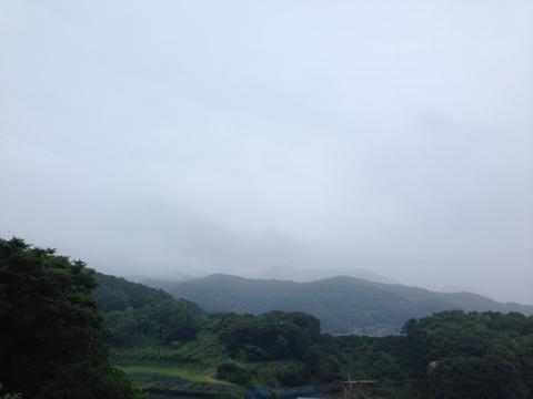 梅雨時の朝ランで出会える光景