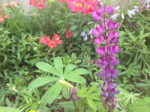 ピンと咲く花