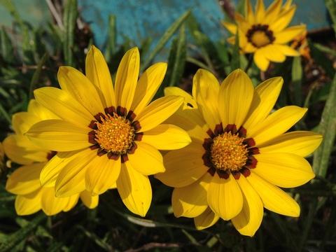 どうせ咲くなら綺麗に咲こう