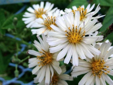 道端に咲く花から…