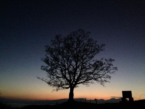 大地に立つ樹木から学んだこと