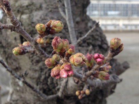 桜が咲く頃、新たなステージへ