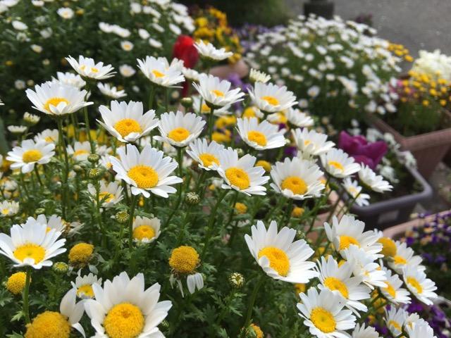 それぞれの花を咲かせよう。