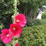 自分の花を精一杯に咲かせよう