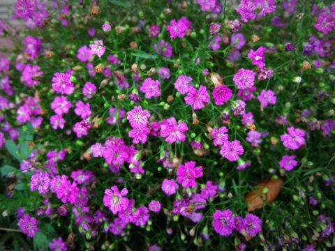 小さな花みんなできれいに咲こう
