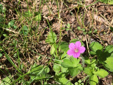 小さな花を見守る