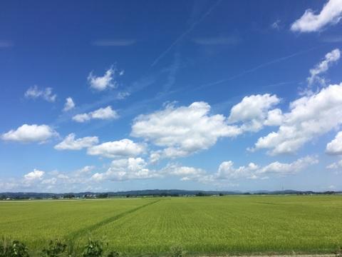 日本の夏、それぞれの夏
