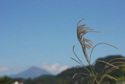 ススキと磐梯山
