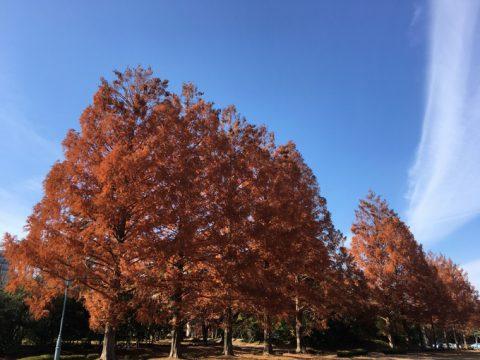赤く染まる樹木