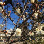 梅が咲いて加速する3学期