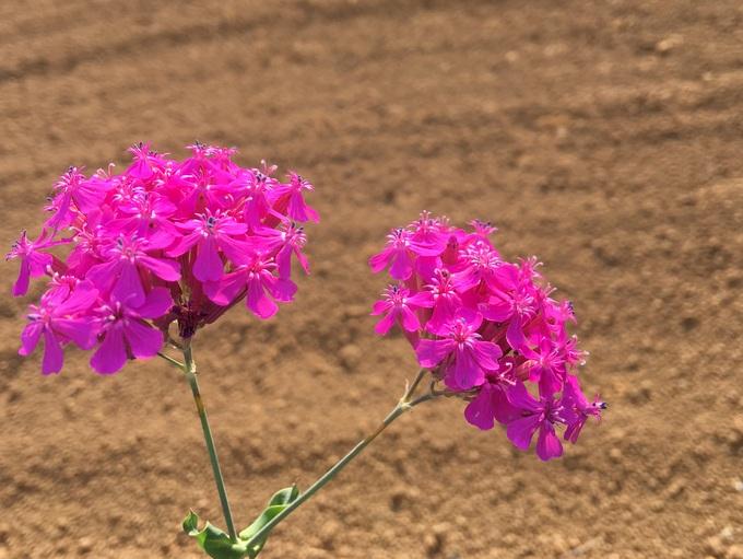 散歩中に見つけた花