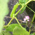 小さな花に学ぶポジティブな人生