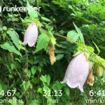 Apple Watch Series 2とRunkeeper