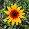 朝ランで見つけた一輪の花