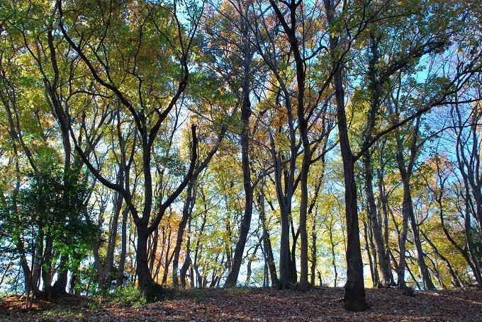 歩いて5分で美しい雑木林