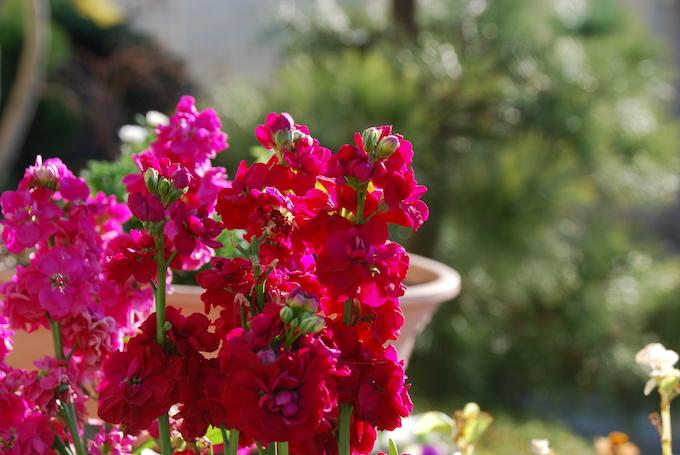 NikonD80で花を撮る