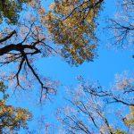 冬空の樹木を見上げながら感じること