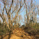 気軽なトレイルランニングは弘法山で!