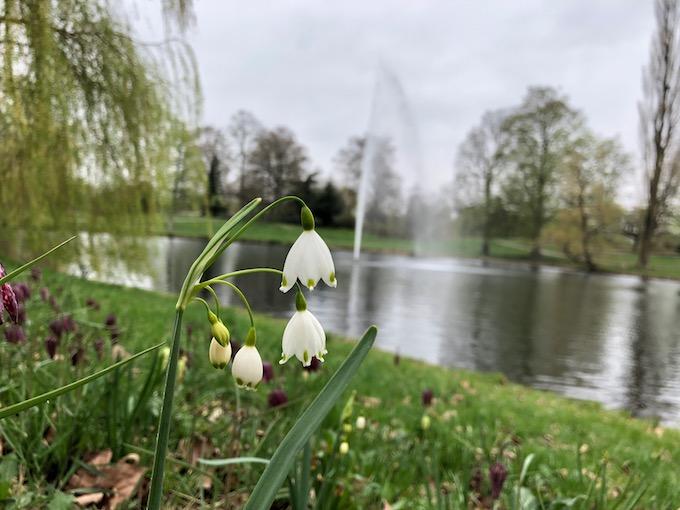 ちょっとした公園にも可愛い花