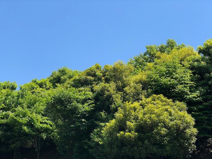新緑の季節が到来