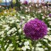 ひとつの花から多様性を見つけられるか。