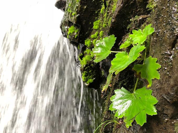 乙女の滝にて